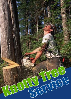Tree_Cutting_Tacoma_WA