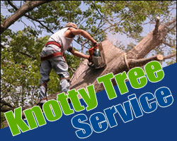 Tree_Removal_Puyallup