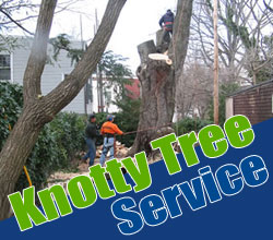 Pierce_County_tree_cutting_service